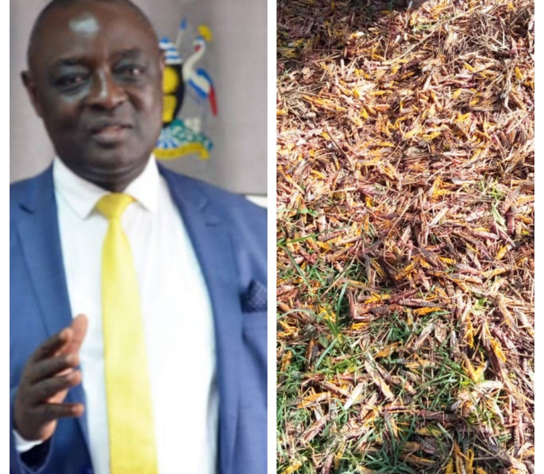 Min. Agriculture Asks Gov't For Shs16Bn To Fight New Swarm Of Locusts