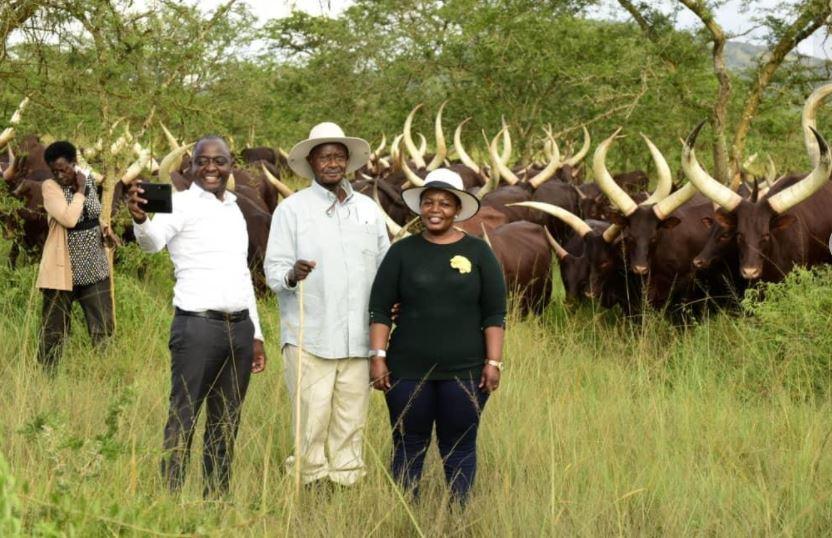 Tycoon Ham,  President Museveni  Talk Business At Kisozi Farm