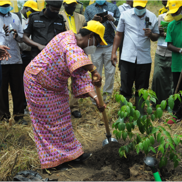 MTN Restores 50 Hectares of Forest cover in Arua as it continues to Deepen its Roots in Uganda